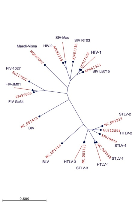 Radial tree for retrovirus complete genome sequences
