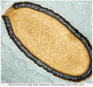 """Pithovirus sibericum"", from Jean-Michel Claverie and Chantal Abergel"