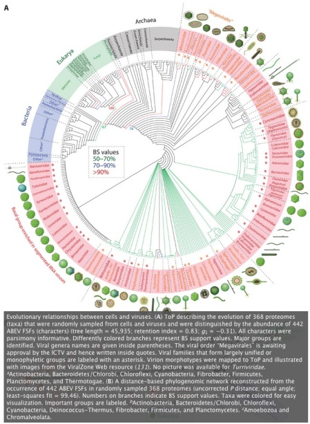 A_phylogenomic_data-driven_exploration_of_viral_origins_and_evolution___Science_Advances
